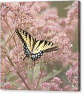 Garden Visitor - Tiger Swallowtail Acrylic Print