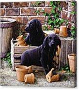 Gardeners Corner Acrylic Print by John Silver