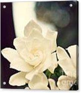 Gardenias Acrylic Print