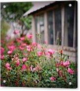 Gardens Of Pink Acrylic Print
