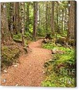 Garibaldi Path To Cheakamus Lake Acrylic Print