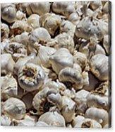 Garlic Harvest Acrylic Print