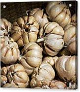 Garlic In A Basket. Acrylic Print