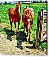 Gate Horse Acrylic Print