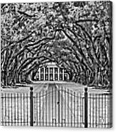 Gateway To The Old South Bw Acrylic Print by Steve Harrington