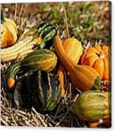 Gather The Harvest Acrylic Print