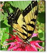 Gathering Nectar Acrylic Print by Kim Galluzzo Wozniak