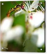 Gathering Of The Pollen Acrylic Print