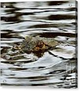 Gator Eyes Acrylic Print