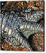 Gator Manicure Acrylic Print