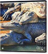 Gator Pals Acrylic Print