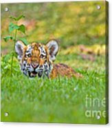 Gauging The Distance Acrylic Print by Ashley Vincent