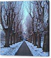 Gauntlet Of Trees To Hohenheim Castle Acrylic Print