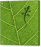Gecko Acrylic Print by Aged Pixel