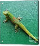 Gecko Crossing Acrylic Print