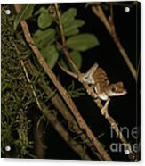 Gecko In The Night Acrylic Print