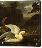 Geese And Ducks Acrylic Print