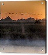 Geese At Sunrise Acrylic Print
