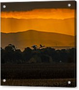 Geese At Sunset - 3 Acrylic Print