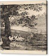 Geese At Water, Elias Stark Acrylic Print