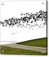 Geese Acrylic Print by Frits Selier