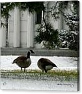Geese In Snow Acrylic Print