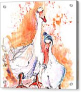 Geese In Spanish Winter Acrylic Print