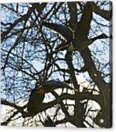 Geese In Twlight Sky Acrylic Print
