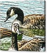 Geese On The Pond II Acrylic Print