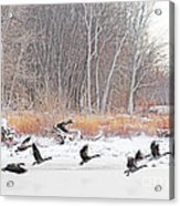Geese Over Maumee River Acrylic Print