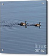 Geese Reflected Acrylic Print