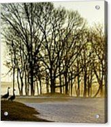 Geese Watching The Sunrise Acrylic Print by Vicki Jauron