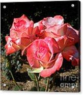 Gemini Tea Rose Acrylic Print