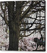 General Meade In The Cherry Blossoms Acrylic Print