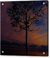 Genesis Tree Acrylic Print