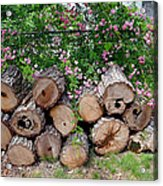 Gentle And Rough Acrylic Print