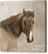 Gentle Devotion Acrylic Print