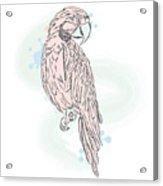 Gentle Parrot Vector. Trendy Shades Acrylic Print