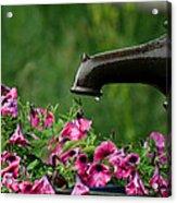 Gentle Rain - Old Water Pump - Pink Petunias - Casper Wyoming Acrylic Print