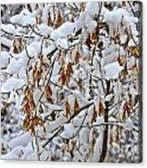 Gentle Snow Fall Acrylic Print