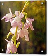 Gentle Touch Acrylic Print