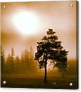 Morning Light Acrylic Print