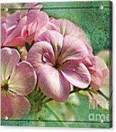 Geranium Blossoms Photoart Acrylic Print