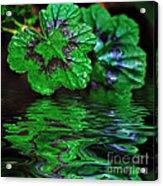 Geranium Leaves - Reflections On Pond Acrylic Print