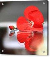 Geranium Reflections Acrylic Print