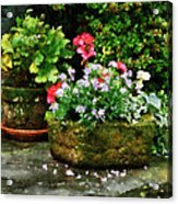 Geraniums And Lavender Flowers On Stone Steps Acrylic Print