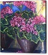 Geraniums Blooming Acrylic Print