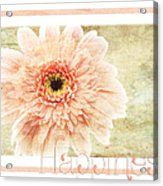 Gerber Daisy Happiness 1 Acrylic Print