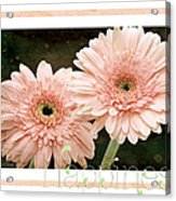 Gerber Daisy Happiness 5 Acrylic Print