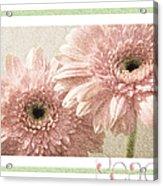Gerber Daisy Peace 3 Acrylic Print